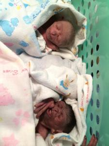 Born 26 th Dec 2014 twins