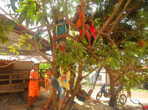 Thai boys in tree