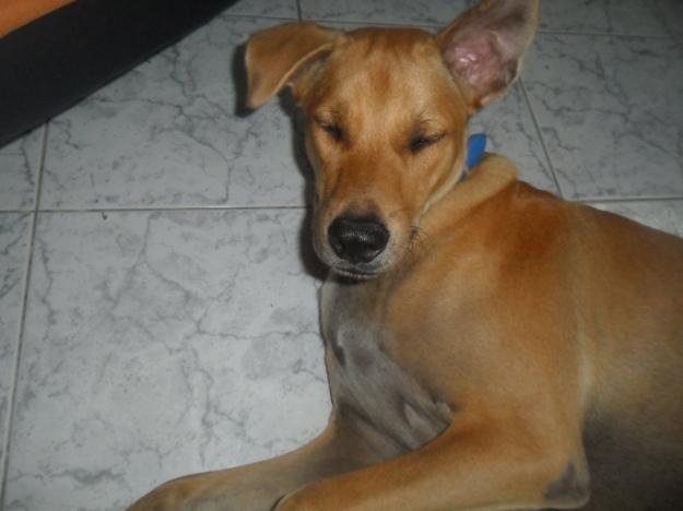 Soi dogs_street dogs-Saanchai