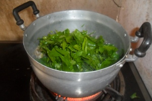 Melientha cooking in pot