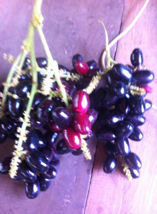 Thai plum 1