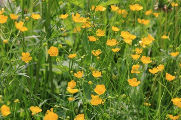 flower-meadow-2944029_1920