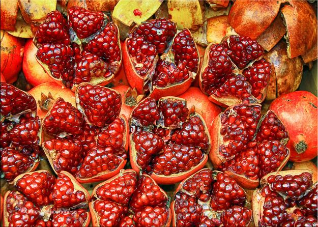 pomegranates showing fruit