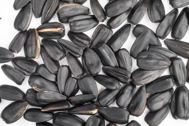 seeds-1827033_1920