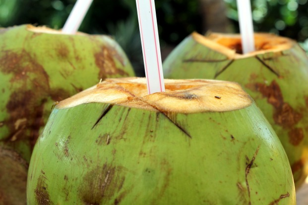 There is nothing like a healthy drink of Coconut juice fresh from the fruit.