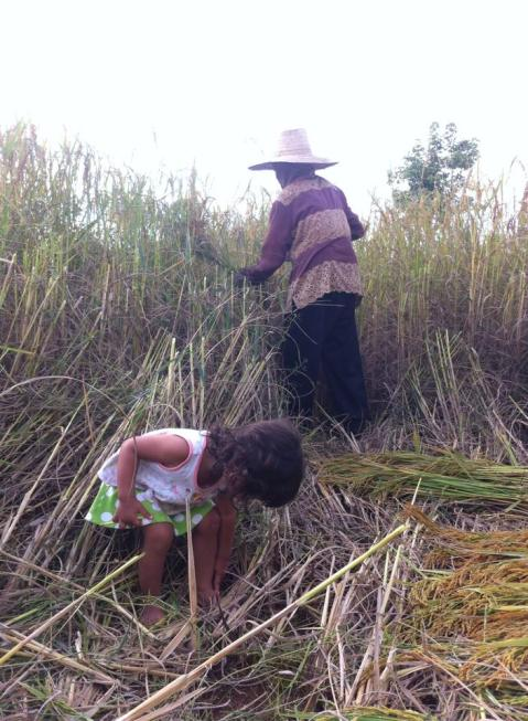 Waste Not! Want Not! Week 16…Rice Husk…Wild Life Crossings…