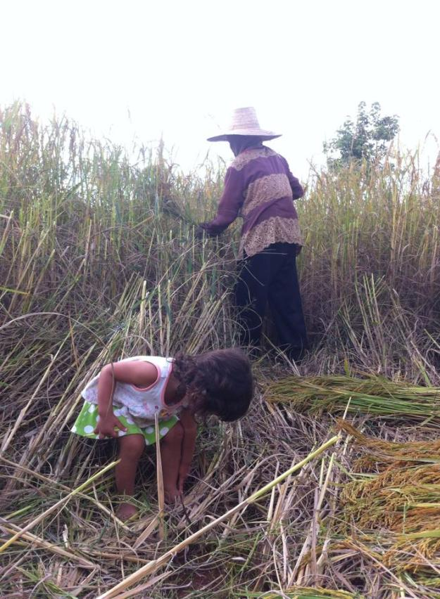 Lily and Oi picking rice