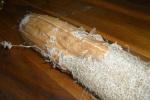 Luffa-home grown-peeling -outer shaell