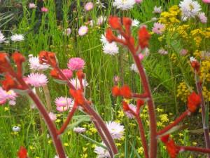 Flowers kings park