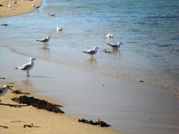 Seagulls penguin island