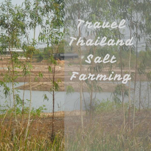 Travel Thailand Salt Farming