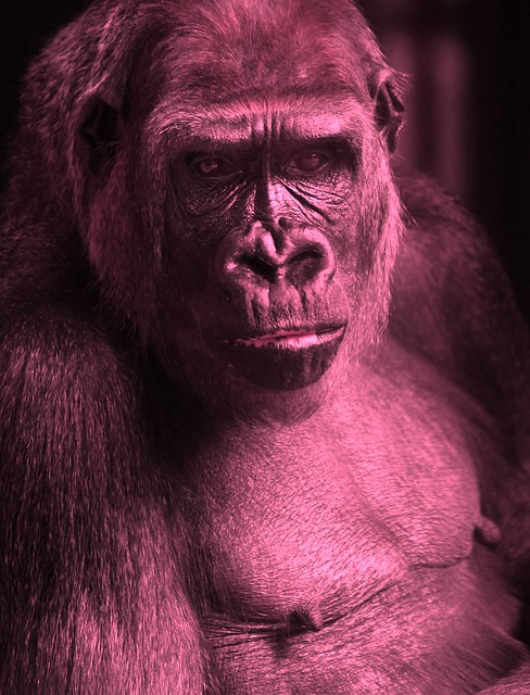 The Pink Ape