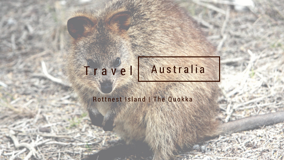 Travel Australia The Quokka
