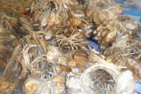 dried-fish-local-Thai-fish