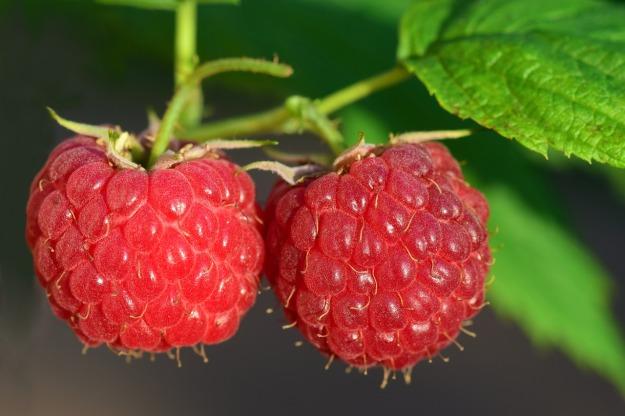 raspberry-3454504_1280