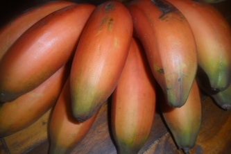 Red Bananas (2)