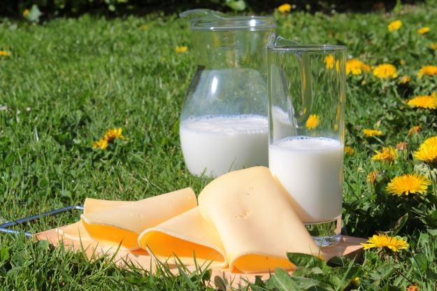 cheese-milk-processsed