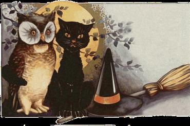 owls-1461952_640