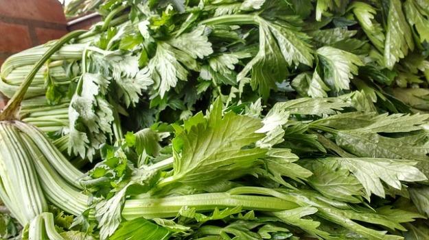 Celery leaves-2288485_640