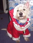 Kero dressed as Santa Pawz 0112200502