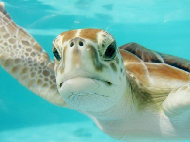 sea turtle mexico-2086549_640
