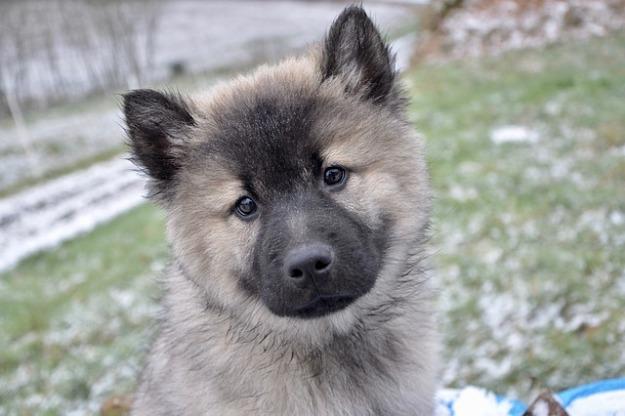 puppy-3191770_640