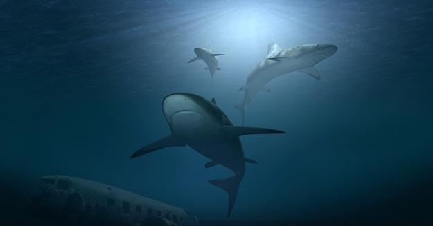 hai sharks-3347789_640