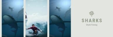 sharks eco system endangered