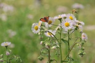 butterfly-2826775_640