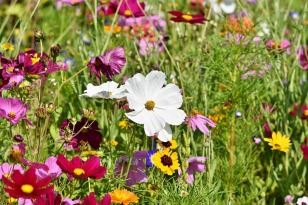 butterfly and bee flower meadow