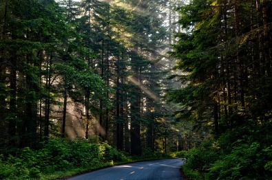 forest trees and sunlight