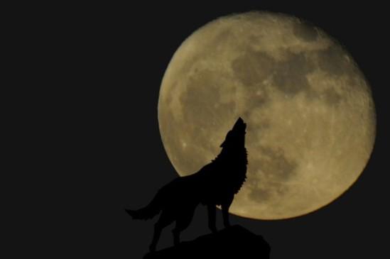 werewolf howling moon