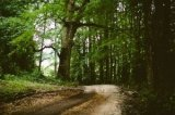 nature-forest-trees-path-3