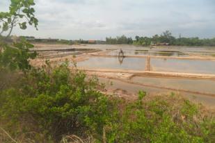 salt farming (13)