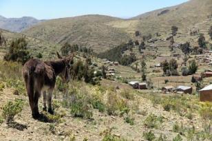 Bolivia donkey hills and hamlets