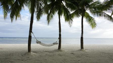 Hammock palm trees beach