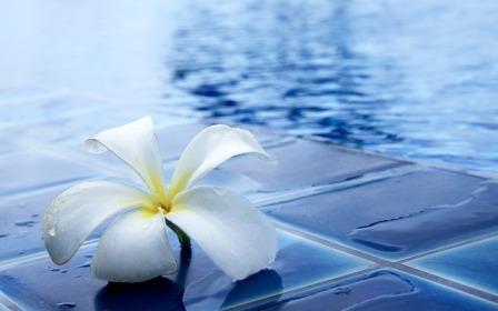Pool flowers-1058876_640