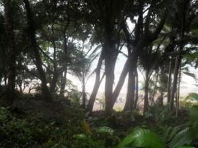 View through trees to banana beach (2)