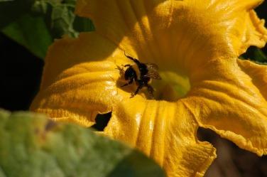 pollination-3572147_640