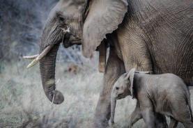 elephants-1081749_640