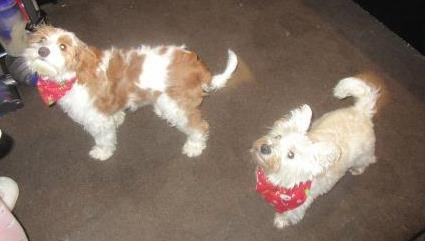 Lilie and Logan in red Christmasy bandannas