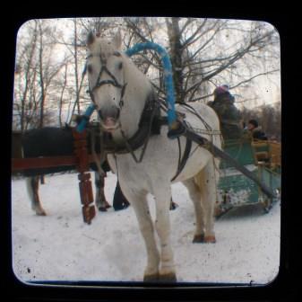 troika snow white horse