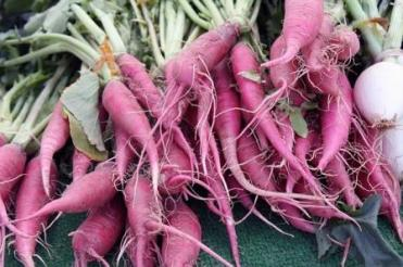 carrot purple -3936797_640