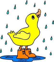 cartoon duck in the rain