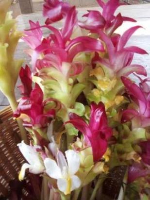 Krachiew flowers 3