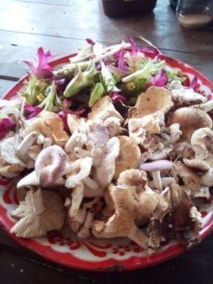 Foraged Wild mushrooms