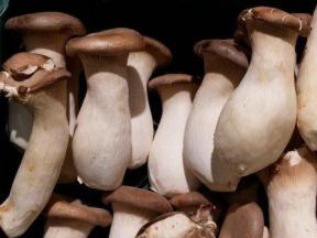 king oyster mushrooms-2151120_640