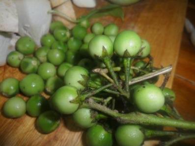 Pea egg plants