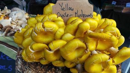 yellow oyster mushroom-790595_640
