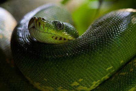animal-zoo-green-snake-60512